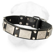 Amazing Shar-Pei Collar with Nickel Plated Studs and Plates