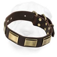 Leather Shar-Pei Collar Decorated with Brass Plates
