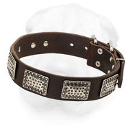 Leather Shar-Pei Collar Decorated with Vintage Nickel Plates