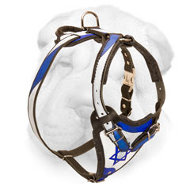 "Outstanding Shar-Pei Harness ""Star of David"""