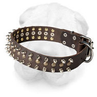 Leather Shar Pei Collar with Nickel Spikes and Brass Studs
