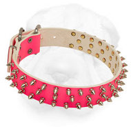 Pink Shar Pei Collar with Nickel Spikes