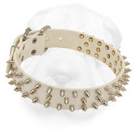 Glossy White Shar Pei Collar with Nickel Plated Spikes