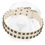 Stylish White Leather Shar Pei Collar with Old Nickel Square Studs