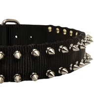 Nylon Shar Pei Collar with Nickel Plated Spikes