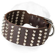 Wide Shar-Pei Collar Decorated with Studs
