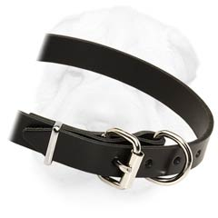 Fine and Strong 1 Inch Wide Leather Collar for Shar Pei