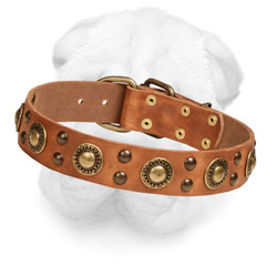 Leather Shar-Pei Collar Decorated with Brass Circles
