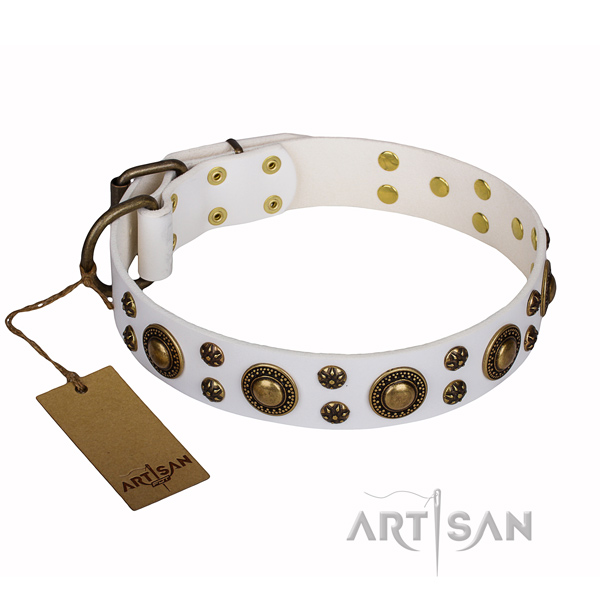 Everyday use full grain genuine leather collar with adornments for your dog