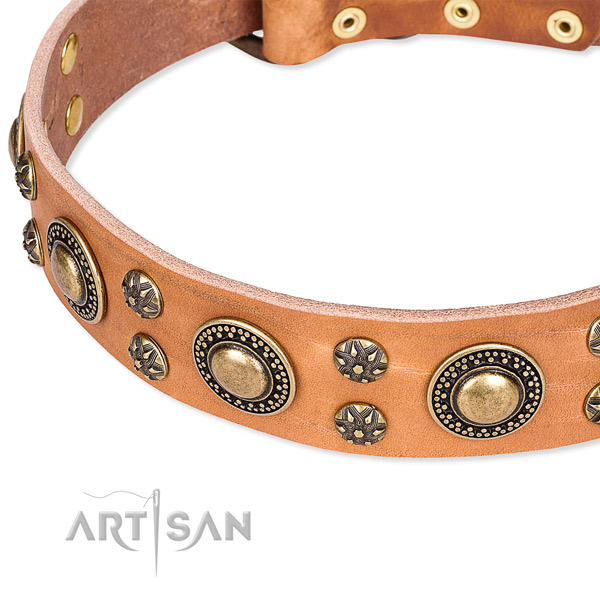 Leather dog collar with exceptional adornments