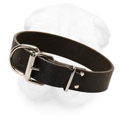 Everyday Shar Pei Collar Made of Genuine Leather 1 1/2 Inches Wide