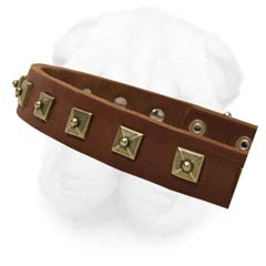 1 Inch Wide Genuine Leather Shar Pei Collar with 1 Row Stylish Brass Studs Decoration
