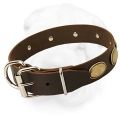 Shar-Pei Collar with Nickel Plated Hardware