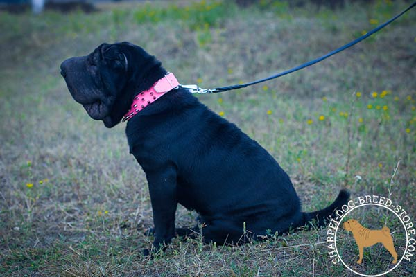 Female pink leather Shar Pei collar for walking in style