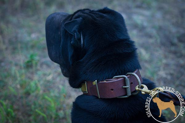 Walking leather Shar Pei collar with reliable brass hardware