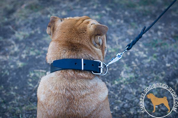 Reliable leather Shar Pei collar with nickel plated hardware