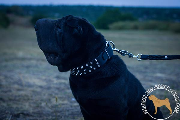 Adorned with spikes leather canine collar for Shar Pei