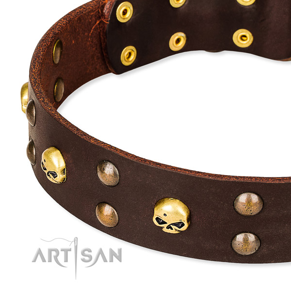 Day-to-day leather dog collar for walking