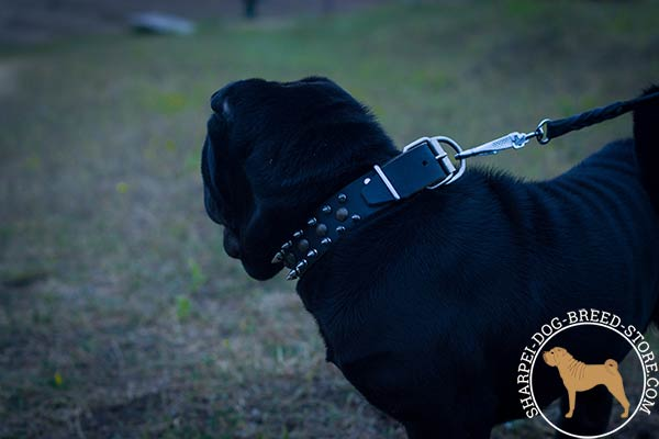 Exclusive leather dog collar for Shar Pei with nickel plated fittings