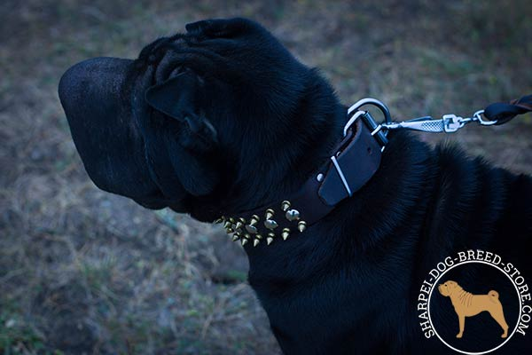 Awesome leather dog collar for Shar Pei with shiny strong hardware