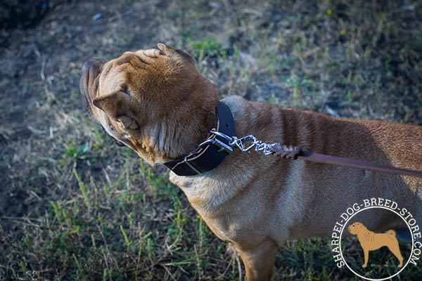 Reliable leather dog collar for Shar Pei with sturdy fittings