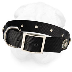Shar-Pei Stylish Collar with Nickel Plated Hardware