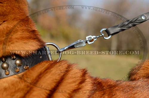 Brass Studs and Nickel Plated Spikes on Dog Collar for Shar Pei