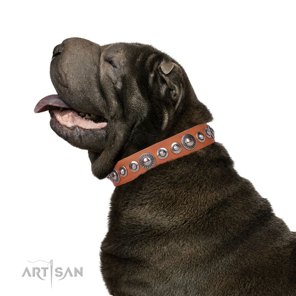 Remarkable adorned natural leather dog collar for daily use
