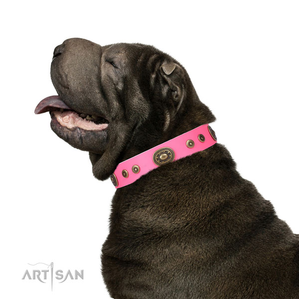 Trendy studded leather dog collar for comfy wearing