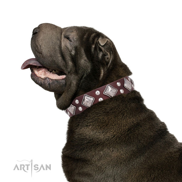 Everyday walking adorned dog collar made of quality genuine leather
