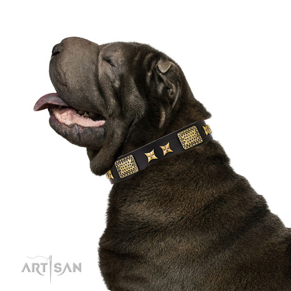 Everyday use dog collar with top notch adornments