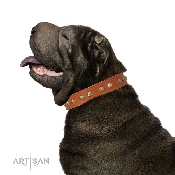 Unusual embellishments on easy wearing natural genuine leather dog collar