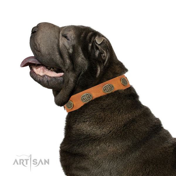 Fashionable studs on daily use full grain leather dog collar
