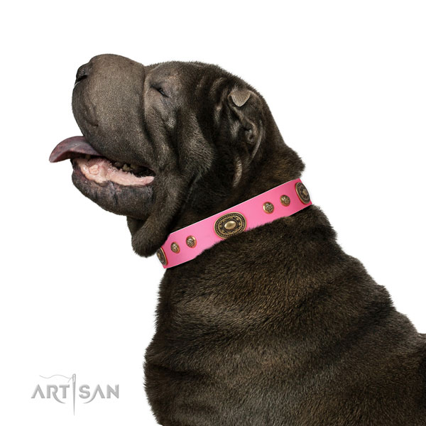 Incredible adornments on fancy walking dog collar