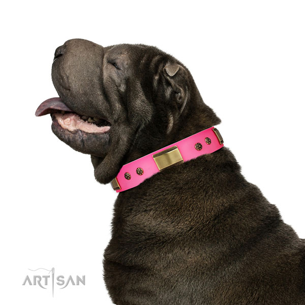 Walking dog collar of natural leather with impressive decorations