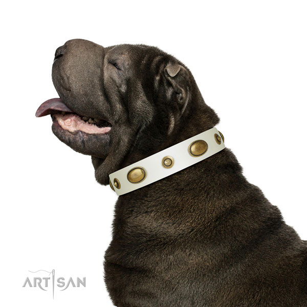 Comfy wearing dog collar of genuine leather with stunning adornments
