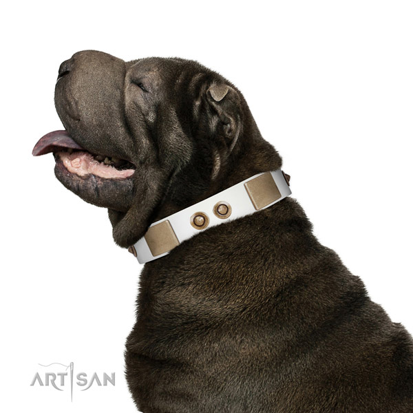 Daily walking dog collar of natural leather with extraordinary adornments