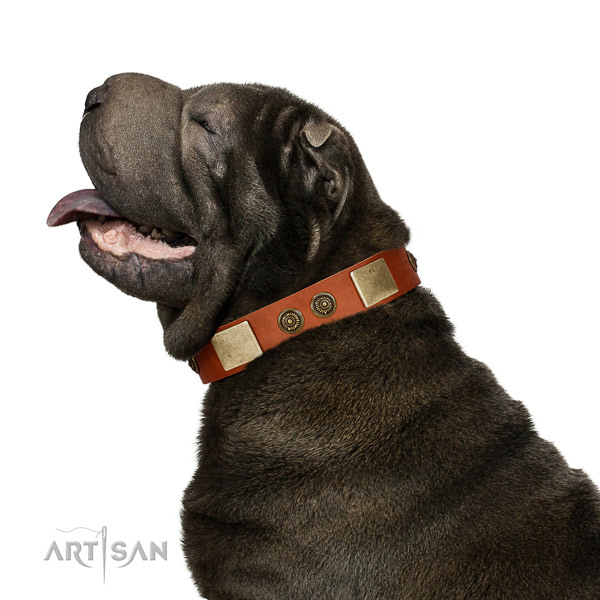 Amazing dog collar created for your stylish four-legged friend
