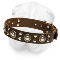 Leather Shar-Pei Collar Decorated with Conchos and Studs
