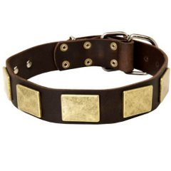 Leather Shar Pei Collar Decorated with Brass Plates