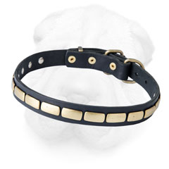 Leather Shar Pei Collar Equipped with Brass Plates