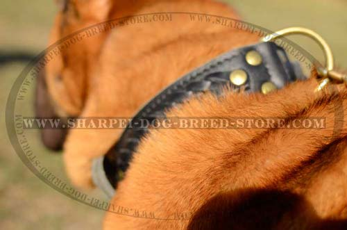 Extra Wide Shar Pei Leather Collar with Special Plate