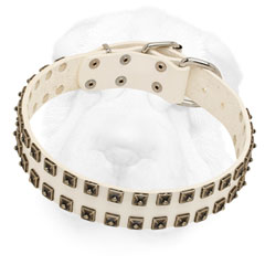 Leather Shar Pei Collar Equipped with Nickel Hardware