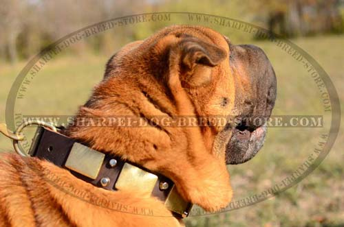 Stylish Handcrafted Shar Pei Breed Collar with Brass Plates