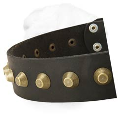 Great Width Leather Buckle Collar with One Raw of Brass Conoid Studs