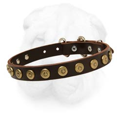 Slim Leather Dog Collar with Dotted Round Studs for Shar Pei
