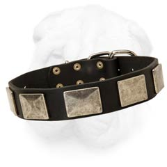 1 1/2 Inch Wide Leather Collar for Shar Pei Dog with Strong Massive Fittings