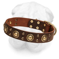 Shar-Pei Stylish Collar with Brass Decoration