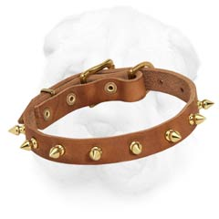 Shar-Pei Spiked Collar with Nappa Padding