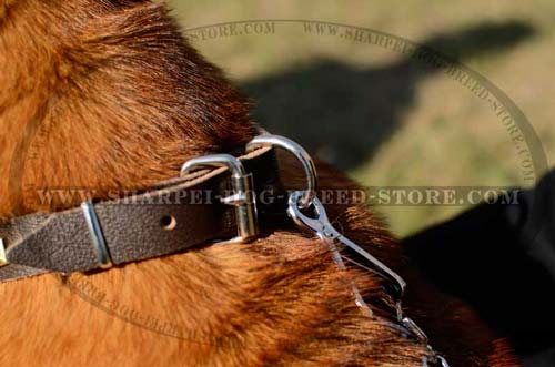 Nickel Plated Buckle on Leather Dog Collar